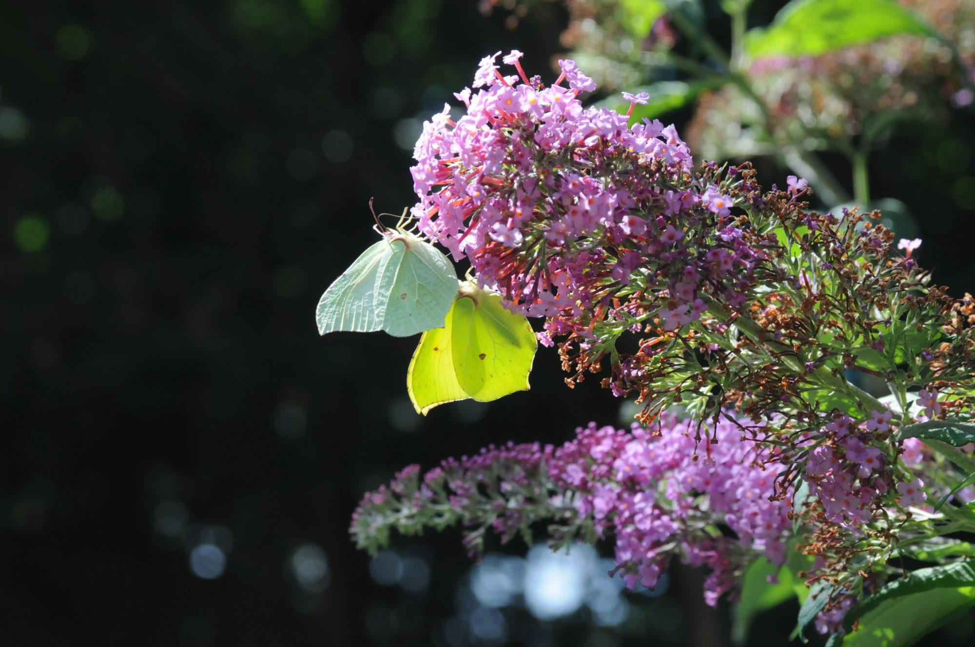 Natuur - gezondheid - welbevinden